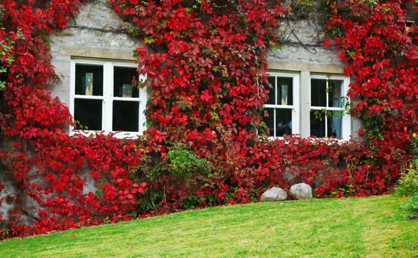 5 Renovations That Are Cheaper in the Autumn