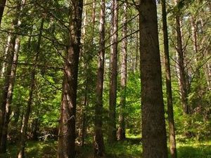 Forest for sale