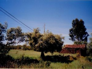 Cheap Properties for Sale & Rent in Portugal - Property