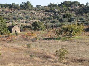 Peaceful quinta on 1.7 hectares - €25,000 Ref:18/323