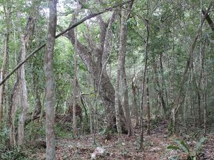 1,000m2 Land- Private Rural Concept- 8mi South of Tulum