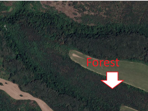 Ecological clean woodland with beautiful virgin forest
