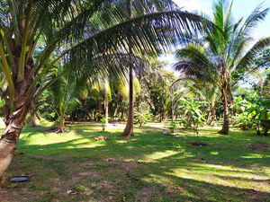 Land for rent in Baan Tai, Koh Phangan