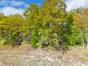 Be one with Nature on this Vacant Lot -Murchison TX 75778