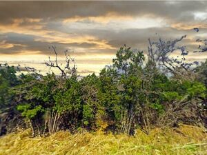 Prime Piece of Property - Golf Course Subdivision - TX 76692