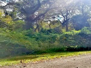 2 pristine lots in a Lakeside Community!