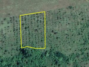 Agricultural land Umni Dol 4653m2. 4km from main town