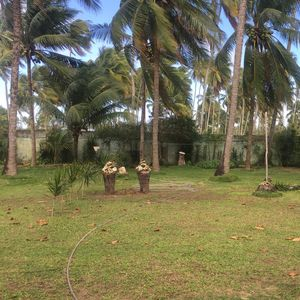 Land 50 meters from the beach