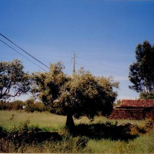 Stone house in a 3900 smt land near the boarder with Spain