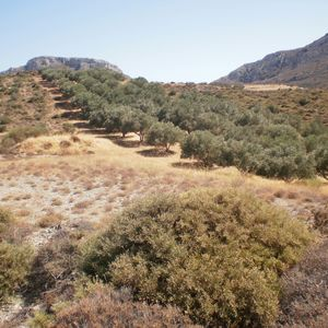 Parcel of land with Olive grove in Sitia, Crete, Greece
