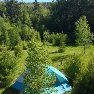 14.800m2 beautiful forest land in Canada Cape Breton